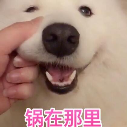 请善待你身边陪伴你的宠物,他们的寿命很短,如果他们咬烂你的东西,别打它,别骂它,准备锅就好!#精选##宠物#