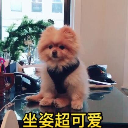 司麻来波士顿啦,今天遇到了一只狗狗,坐姿超可爱~~😛😛#宠物##逛拍##带着美拍去旅行#