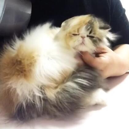 #加菲猫##加菲猫的幸福生活#吹呀吹呀我的骄傲放纵😂