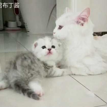 想三小只了,做了个回忆录☺☺☺ #宠物##奶猫##精选#@宠物频道官方账号 @美拍小助手