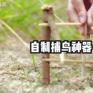 #手工#小时候是这样捕鸟的,不知有没有小伙伴有过这样的童年#我要上热门##海南#😂😂(欢迎微信公众号:阿侬在海南)