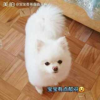#宠物#到底是把毛毛留长还是剪成俊介装😊宝宝有点小纠结😛朋友们给个建议😜😘😘#精选##会放电的萌宠#
