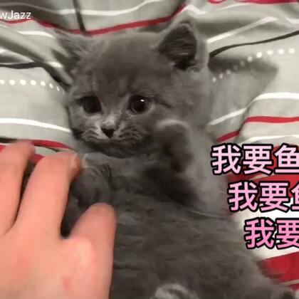 家庭新成员Nemo😜#萌宠##这只宠物有点萌##英短蓝猫#