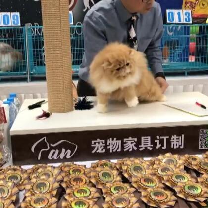 #加菲猫##加菲猫的幸福生活#第一赛环🌸