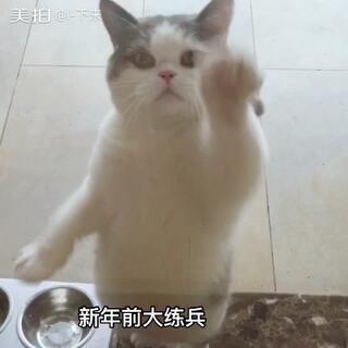 玻璃工擦玻璃一小时一个猫罐,预定接单中。无论看秀还是看成果,都会给你带来不一样的感觉。😄#宠物#