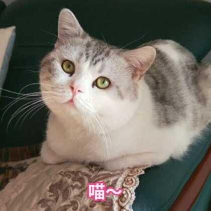 #宠物##日志##精选#@宠物频道官方账号 @美拍小助手 牛奶 真好看