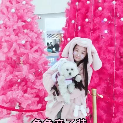 #穿秀##美拍宠物有毒小视频##美拍陪你过圣诞#和沫老大的兔兔装.好看吗?超喜欢粉色圣诞树呢!美美哒!小仙女们喜欢吗?点赞一起过圣诞吧😘😘😘