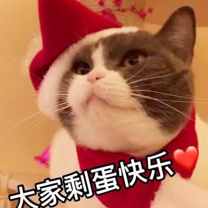 锵锵锵 都坐好了😂敲黑板了喂 喵妹教你们圣诞节🎄正确的打开方式😅#宠物##精选##宠物小剧场#