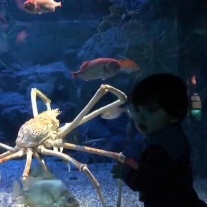 森哥哥的第二个平安夜@大阪海洋馆#宝宝##Yusen十二个月#