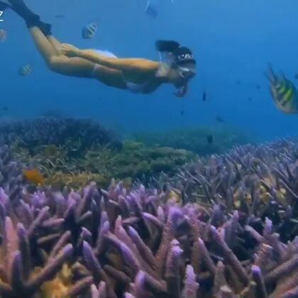 海洋是蓝色的,珊瑚不应该蓝色,它是在变异自己警示世人,🆘停止伤害我🙌不要使用防晒霜,减少制造垃圾,少肉多菜,一点一滴的努力就能积累强大的力量,减缓全球暖化的脚步👣#自由潜水##🍉运动##帕劳潜水#