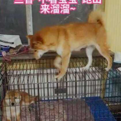 #陪着你走##宠物##精选#兰香妈妈 🍉了😂😂