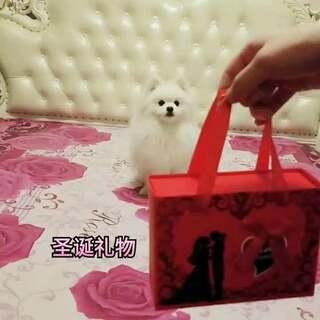 一份神秘的圣诞礼物🎄🎄🎄🎄…双击可以打开礼盒🎁…圣诞🎅小狗🐶亲自送货上门…😍😍😍😍🌹🌹🌹🌹🌹🌹🌹#宠物##圣诞节##圣诞快乐#