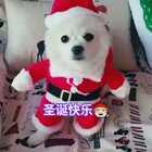 #铃儿响叮当#萌宠汪祝大家圣诞节快乐🎄🎄🔔🔔#精选##宠物#🎉🎉🎉🎉🎉🎉🎉🎉🎉🎉🎉🎉