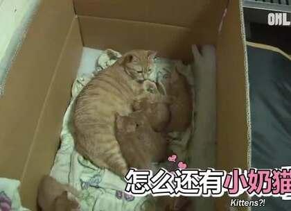 #萌宠# 一只流浪的胖橘猫,每次怀孕就赖到店里不走了,店主就开开心心的照顾它生了三窝。天冷后大家都在力所能及帮助着周边流浪的毛孩子,希望它们过个能吃饱的暖冬❤