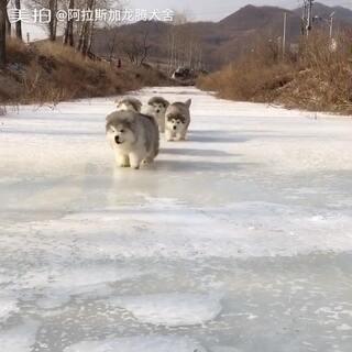 冰上哧滑溜…#阿拉斯加#