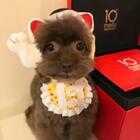 #美拍新年礼物开箱##宠物#收到美拍寄来的新年礼物啦🎁非常感谢美拍的工作人员❤️也非常感谢粉丝们一直以来对逗宝的支持🙏爱你们💕