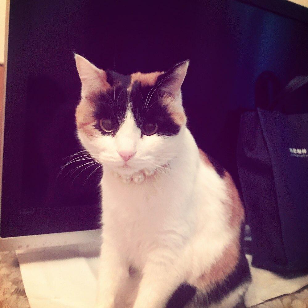爱喝矿泉水的猫咪的美拍