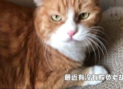 小咪:papi问我出差期间有没有欺负老胡,嗯...这要怎么说呢[思考] #搞笑##宠物##我要上热门#