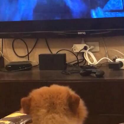 電視兒童📺#宠物##宝宝##電影#