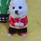 #宠物##精选#提前祝大家新年快乐!祝大家2018财运亨通!身体棒棒!事业更上一层楼!🎉🎉#我的宠物萌萌哒#