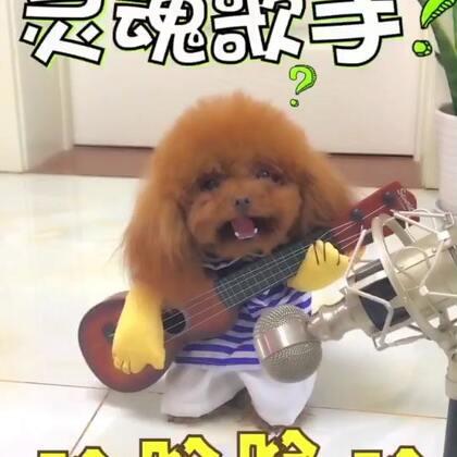 #宠物##搞笑##汪星人#灵魂歌手来袭😂