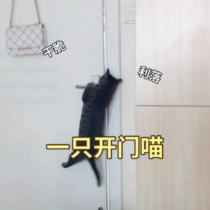 会开门的喵星人~只要一声呼唤,单枪匹马来相见!养了四只猫各有各的神通,唯独出了这一只骁勇的猫~😆😆#喵星人##宠物##宠物技能大赛#