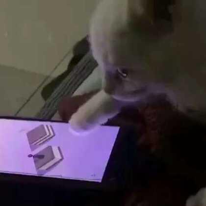 票圈看到的!不如一只喵!#搞笑视频##猫星人##微信跳一跳小游戏#