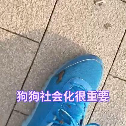 【训犬师/养狗的超哥美拍】01-01 15:42