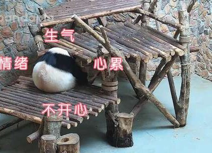 #萌团子日常# 胖嘟嘟有啥好处呢?可爱?温暖?有安全感?再比如说——柔软。看完之后请不要笑话熊家好吗!