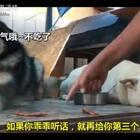 白汪本来早就能吃上的,愣是被猪队友拖了半天😂😂#宠物##搞笑#
