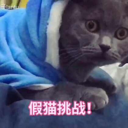 🐈此猫不火🔥天理难容!送上咖喱的小视频合集。😃我的猫咪叫做咖喱,刚刚满一岁了。我怀疑它可能有被害妄想症,它每天都幻想家里有人要谋杀它,所以它的眼睛一直都很惊悚也很傻。。。它最擅长的就是假猫挑战😂#猫咪##宠物##喵星人#