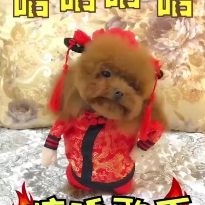 #宠物##搞笑##汪星人#惊魂歌手😂