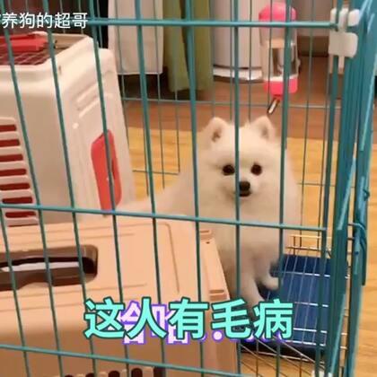 【训犬师/养狗的超哥美拍】01-02 20:32