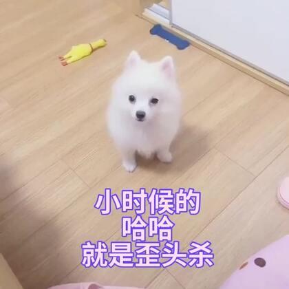 【训犬师/养狗的超哥美拍】01-03 01:17