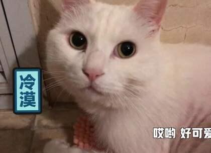 大咪最近少女心爆棚,看上了一块粉色毯子。 小咪心系papi的高级化妆品无法自拔... #搞笑##宠物##我要上热门#