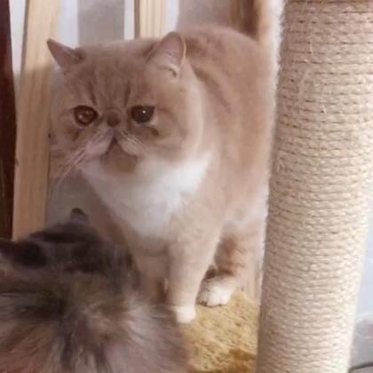 #加菲猫##加菲猫的幸福生活#关于恋爱那些事儿❤️