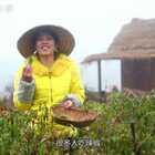 今天摘了点辣椒叶子回家煲汤,应该很多人都不知道它原来可以吃的吧!#我要上热门##美食##农村生活#