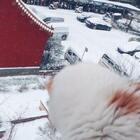 哇,下雪啦
