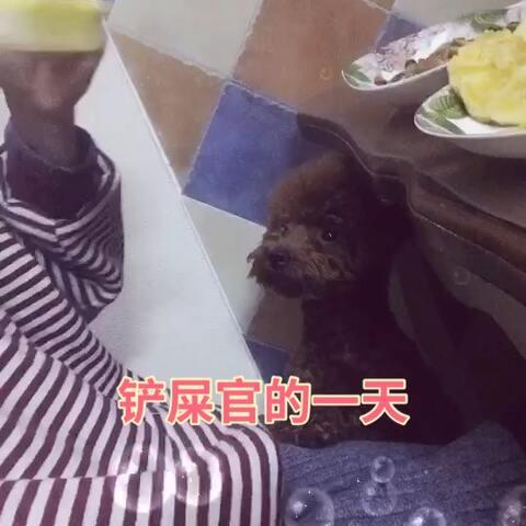 【喵喵儿美拍】很多朋友都还不知道悟空爱吃的食...