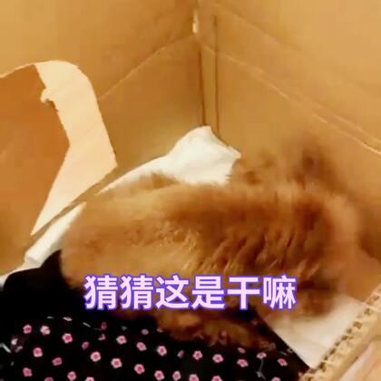 【训犬师/养狗的超哥美拍】01-06 15:32