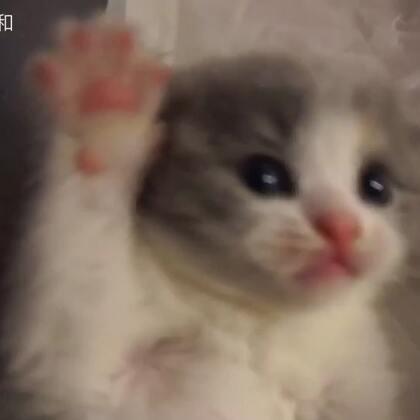 【子猫日和美拍】01-06 20:37