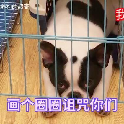 【训犬师/养狗的超哥美拍】01-06 23:00