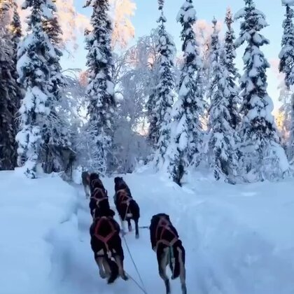 #旅行##雪橇犬##阿拉斯加#这边的人都对🐕很好哦~它们一看要拉🛷都争前恐后😂😂