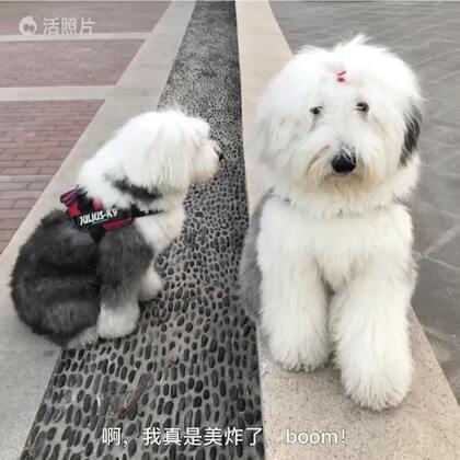 #宠物#四喜:朵妹儿 你确定?😂😂