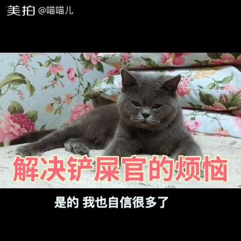 【喵喵儿美拍】今天喵妈分享平时给宠物处理毛的...
