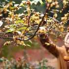 原来用腊梅和苹果做饼这么好吃啊。#我要上热门##美食##农村生活#