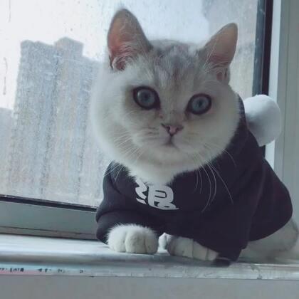 为哇哥打call,越来越漂亮了#宠物##猫咪#