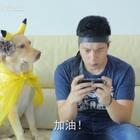 """#小布的日常生活# """"哈哈哈哈哈哈我完全不记得我有拍过这个视频 现在看起来好搞笑啊"""" #宠物##搞笑#"""