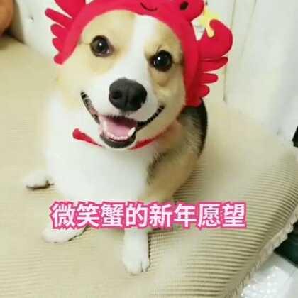活捉一只微笑蟹,2018希望大家都有(钳)钱🤑🤑🤑#宠物##汪星人##肉圆小短腿#