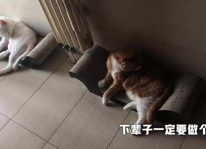 欢迎来到papi家的幼儿园~小咪史上最丑睡颜大曝光! #搞笑##宠物##我要上热门#